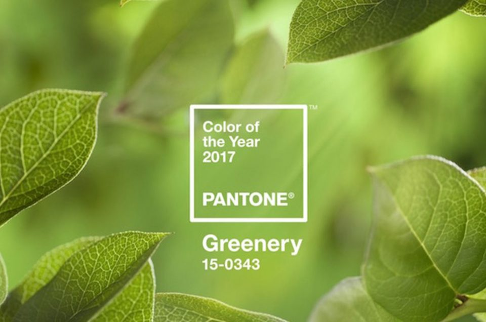 Pantone's Color of the Year 2017 is Greenery!